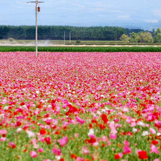 field-of-flowers-vertical
